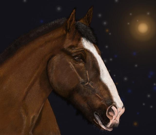 obraz koni